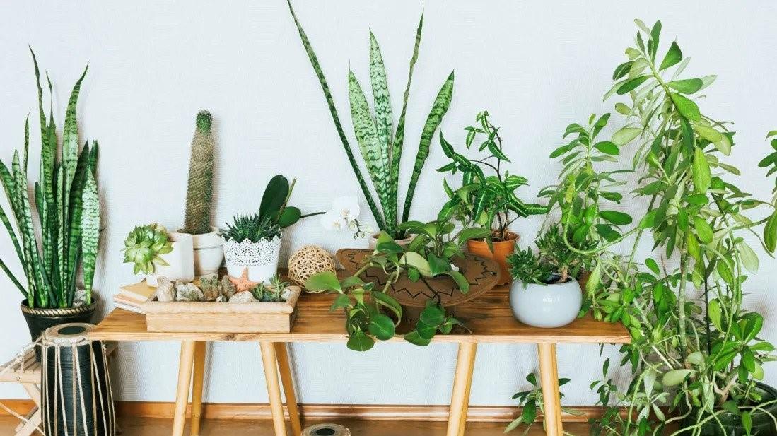چگونه با کمک مشاوره تلفنی و آنلاین گل و گیاه، از گیاهان خود مراقبت کنیم؟
