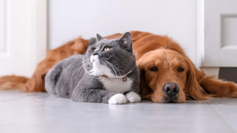 معرفی وبسایت پتیشا، خاص ترین محصولات حیوانات خانگی